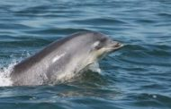 From auks to dolphins: Projects selected for Scottish offshore wi...