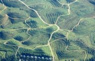 Biofuels needed but some more polluting than fossil fuels, report...