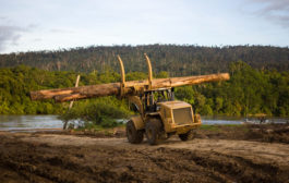 Luxury retailers have rotten stance on wood sourcing, says WWF...