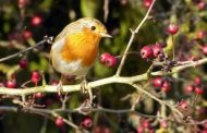 'Haywire' seasons lead to freak year for nature, says N...