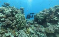 Coral reefs 'at make or break point', UN environment he...