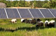 Report: Global solar market surges nearly 30 per cent, as Europea...