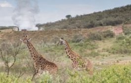 The joys of springs: how Kenya could steam beyond fossil fuel...