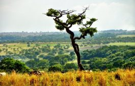 Tesco to kick-start anti-deforestation project in Brazil's C...