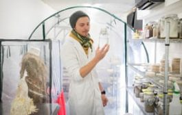 Mushrooms and orange peel: could biotech clean up the building in...