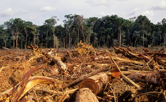 'Urgent priority': UK must tackle supply chain deforest...