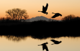 Climate change driving birds to migrate early, research reveals...