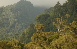 Norway launches $400m fund to fight deforestation...