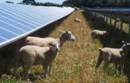 Popularity contest: Public support for renewables slips, but clea...