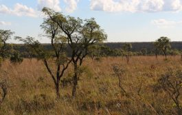 Food firms join Prince Charles to pledge action against deforesta...