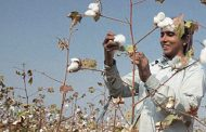 How GM, Mars and Timberland are cultivating smallholder farmers...