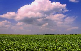 New soy financing initiative aims to beef up protection for Cerra...