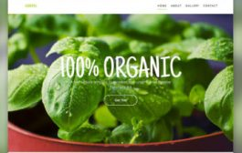 Website Development 101: How to Create an Eco-friendly Website...