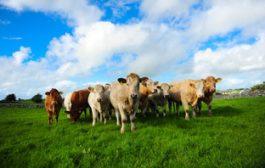Global briefing: Germany mulls new meat tax...